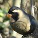 Saltator aurantiirostris - Photo (c) Ezequiel Vera,  זכויות יוצרים חלקיות (CC BY-NC)